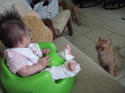 第一隻無奈的離開後,換第二隻也來瞪她,那表情好像很想說走開,這是我的位子啦!.jpg
