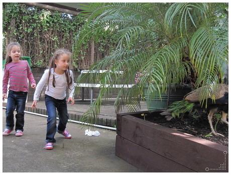 兩個小朋友要追孔雀
