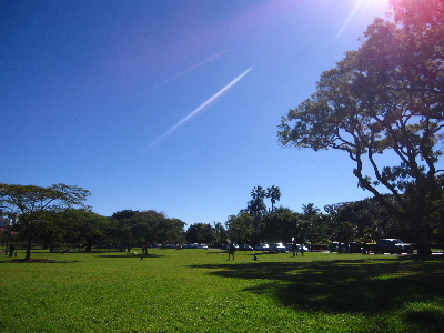 New Farm Park很大,很舒服,大家都帶小孩來踢球野餐