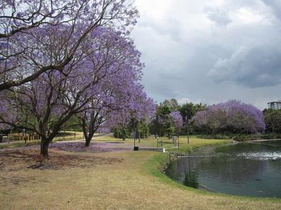 九月底十月初 這種紫色的花越開越多