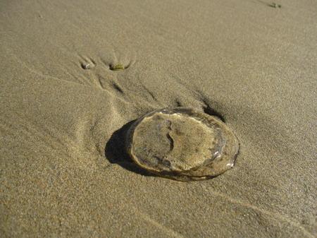 2010_1227_180806沙灘上有很多透明的東西.JPG