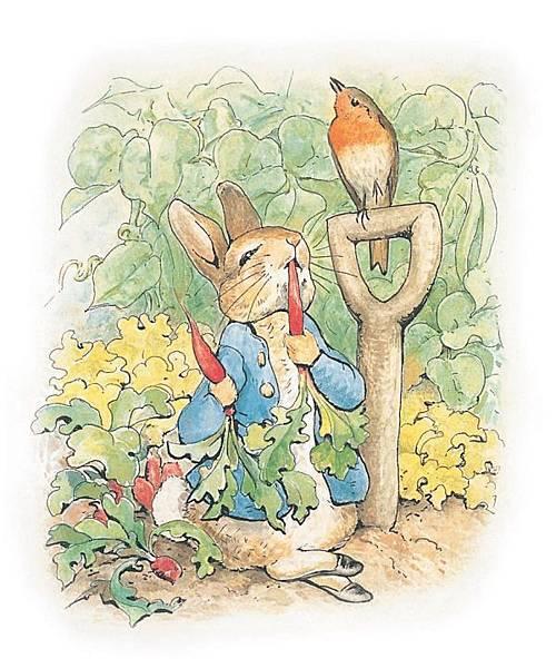 小兔彼得的故事 內頁