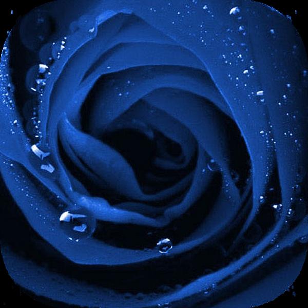 rose 640x640.png