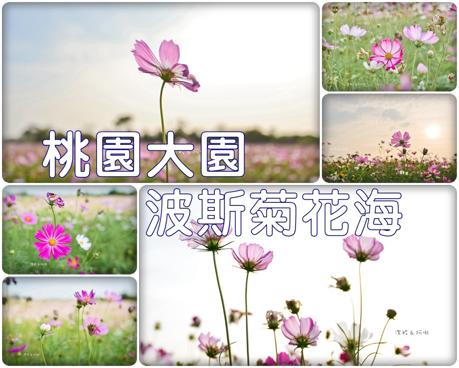 大園花海.jpg