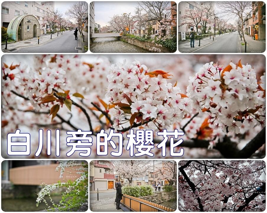 白川旁的櫻花.jpg