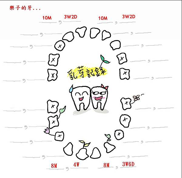 樂子乳牙表