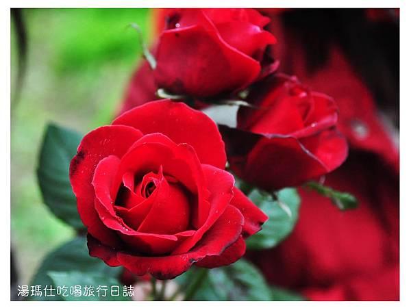 湯瑪仕_2015花季_07