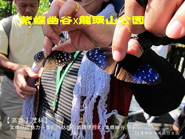 高雄旅遊,茂林生態旅遊,紫蝶幽谷,雙年賞蝶_01