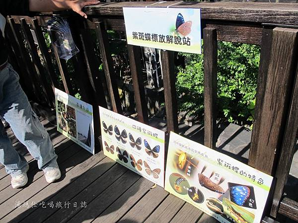 高雄旅遊,茂林生態旅遊,紫蝶幽谷,雙年賞蝶_14