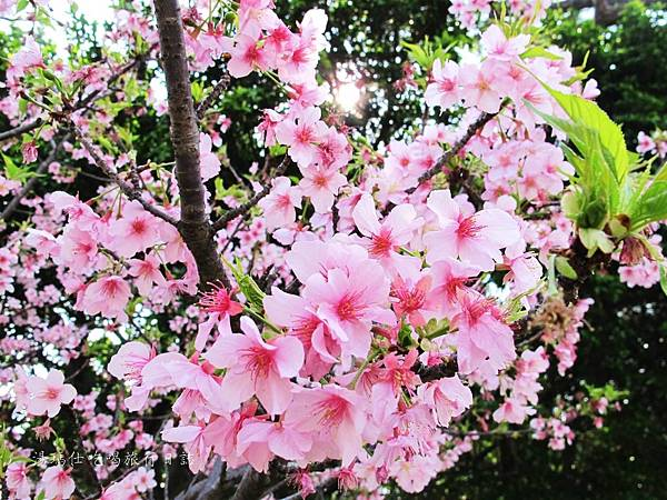 新竹市立動物園,新竹賞櫻,麗池文化祭,春節親子景點_13