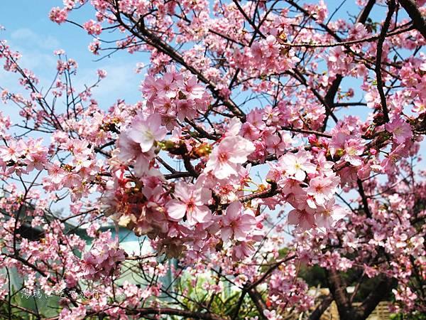 新竹市立動物園,新竹賞櫻,麗池文化祭,春節親子景點_11