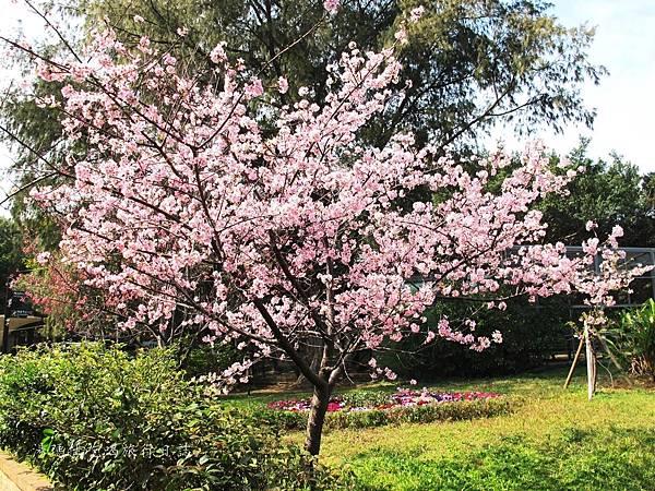 新竹市立動物園,新竹賞櫻,麗池文化祭,春節親子景點_10