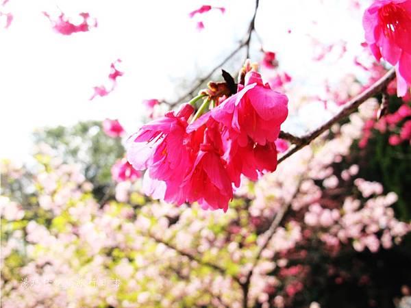 新竹市立動物園,新竹賞櫻,麗池文化祭,春節親子景點_15