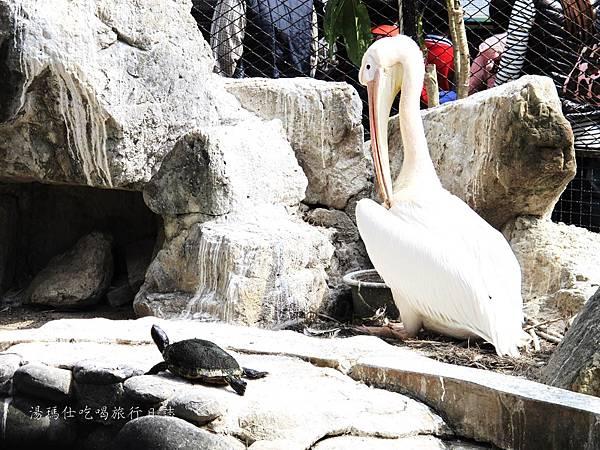 新竹市立動物園,新竹賞櫻,麗池文化祭,春節親子景點_19