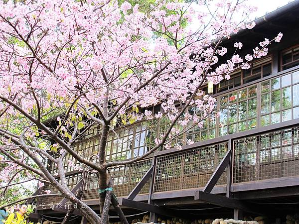 新竹市立動物園,新竹賞櫻,麗池文化祭,春節親子景點_25