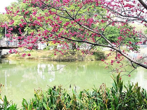 新竹市立動物園,新竹賞櫻,麗池文化祭,春節親子景點_24