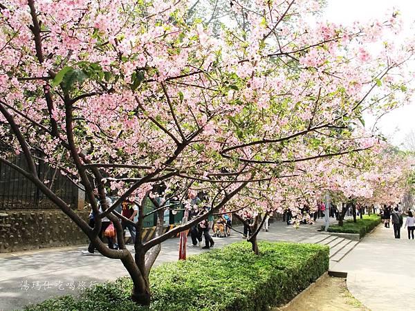 新竹市立動物園,新竹賞櫻,麗池文化祭,春節親子景點_26