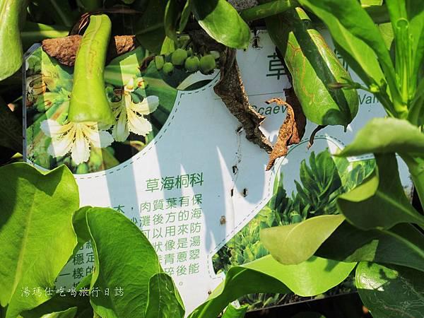 屏東景點,屏東生態旅遊,屏東親子景點,光采濕地_09