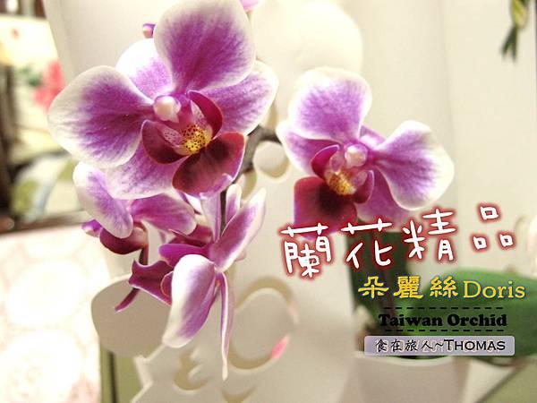 台灣蘭花,蘭花伴手禮,台南蘭花,朵麗絲DORIS_01