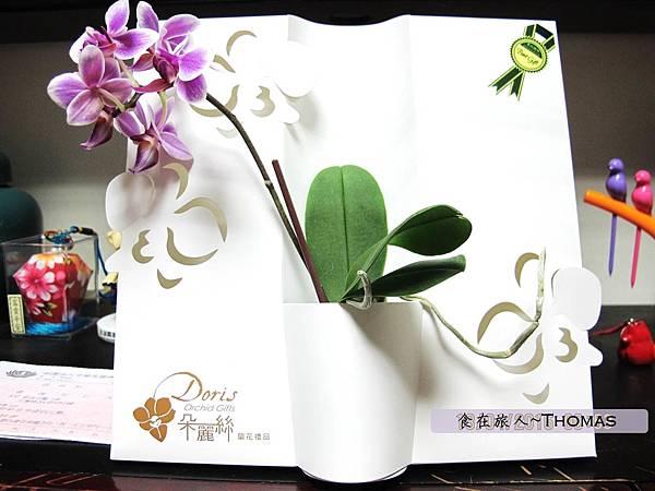 台灣蘭花,蘭花伴手禮,台南蘭花,朵麗絲DORIS_13