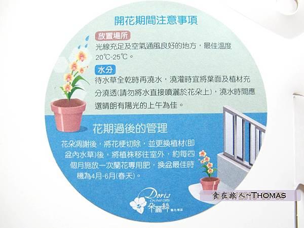 台灣蘭花,蘭花伴手禮,台南蘭花,朵麗絲DORIS_12