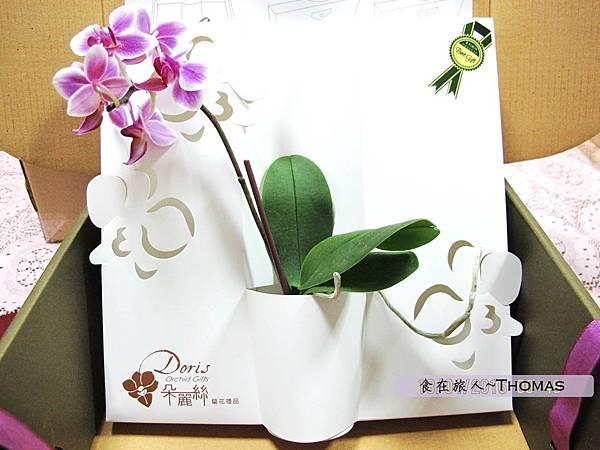 台灣蘭花,蘭花伴手禮,台南蘭花,朵麗絲DORIS_11