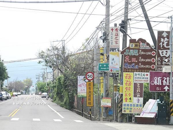 台中景點,2016新社花海節_04