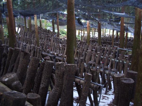 香菇園是長這個樣子的!