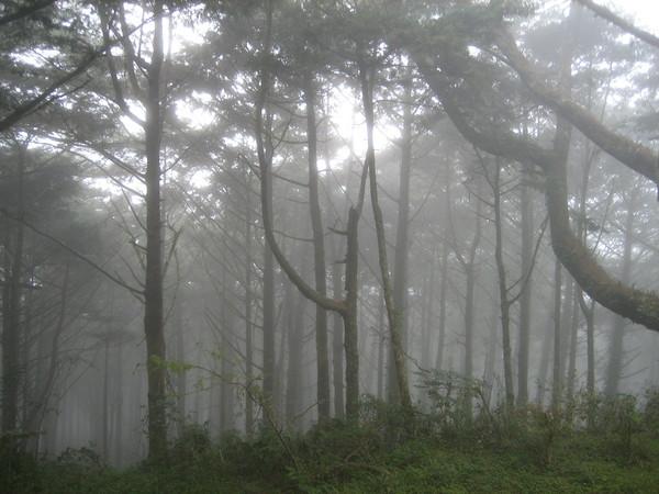 霧中森林有另一種美