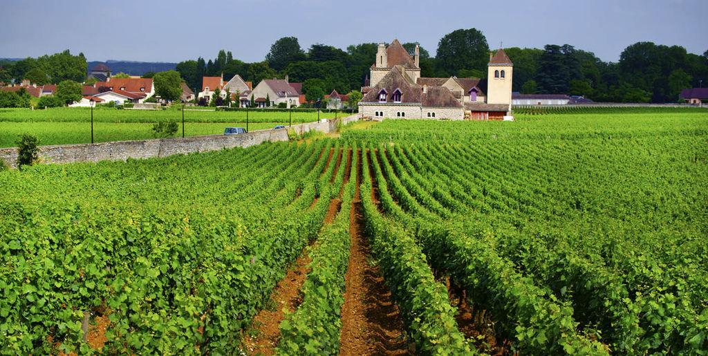 2012-6-30-Bourgogne勃根地-17-4-4 (DRC酒莊)