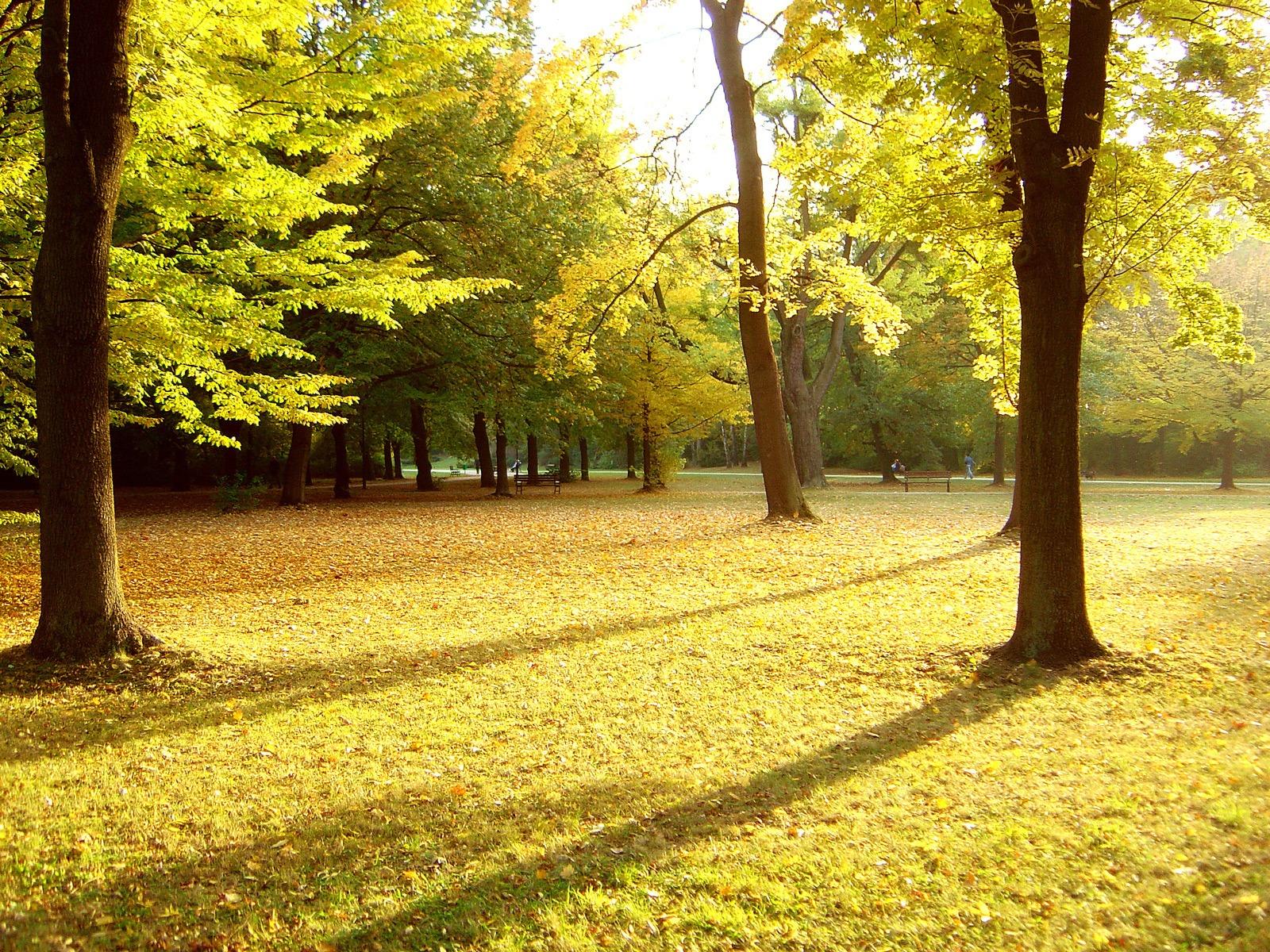 autumn_park.jpg