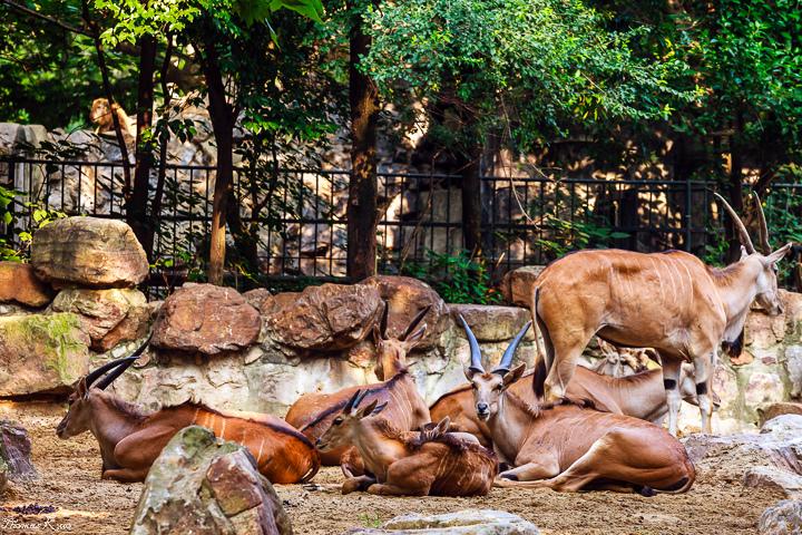 2013-6 上海動物園_001.JPG