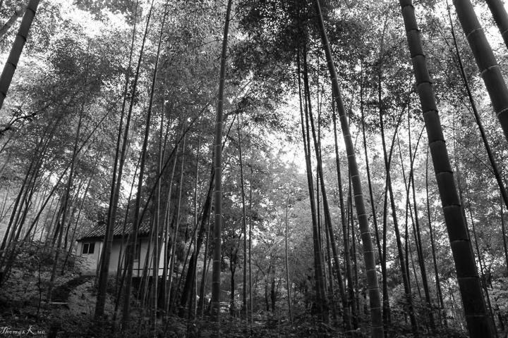 2011-6 佘山_001.JPG