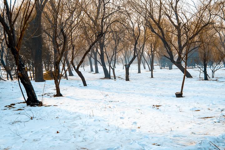 2010-1 北京_012.JPG