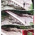 吊橋三連拍.jpg