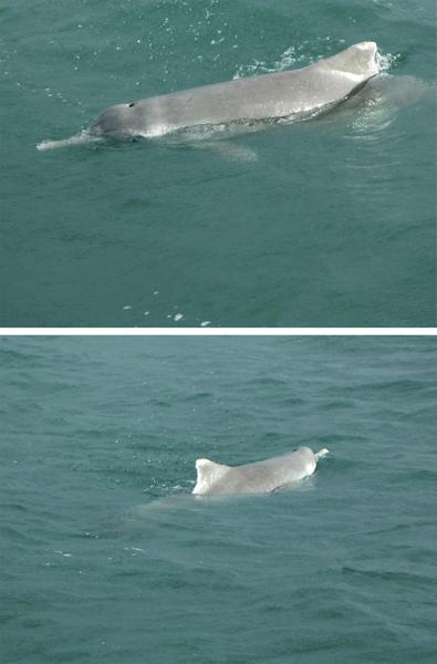 意外看到海豚.jpg