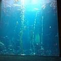 美麗的巨藻缸