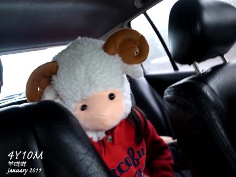 懵然回頭看到一隻羊在後座