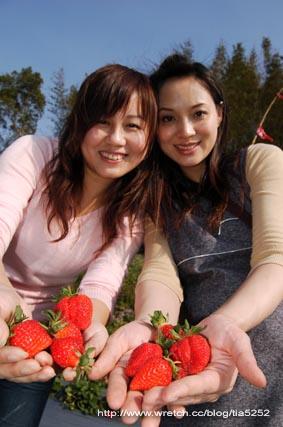 看我們採的巨無霸草莓