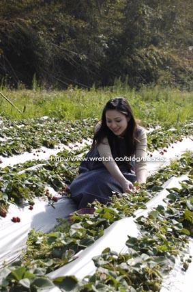 孕婦採草莓是很辛苦的