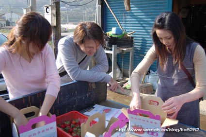 分裝草莓囉!