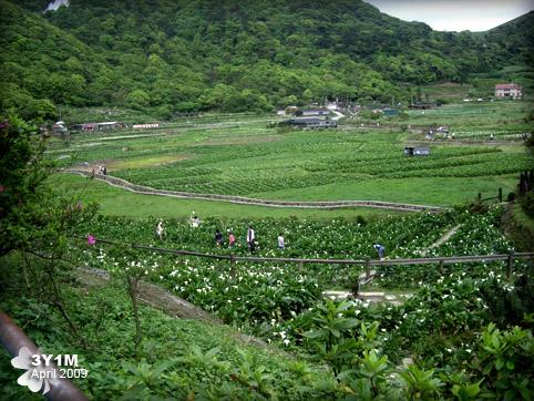 陽明山的竹子湖