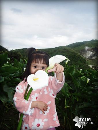 小妞與海芋