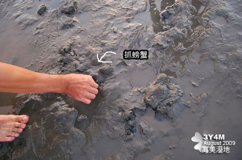 滿地的螃蟹