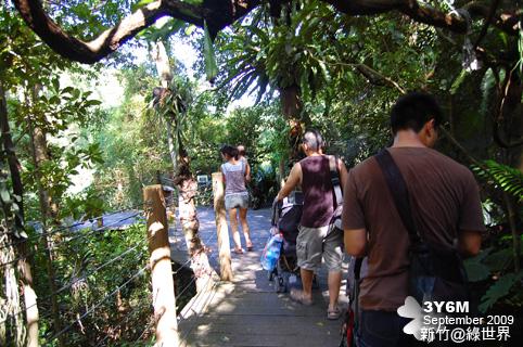 雨林空中步道