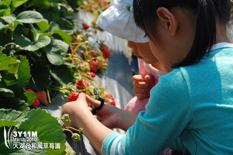 兩個小孩一起剪草莓