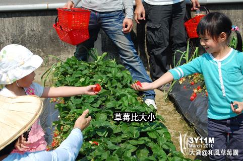 看看誰採的草莓最大