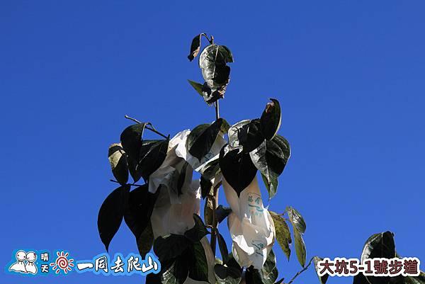20131201-410.jpg