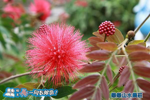 戀戀山水農莊民宿20131228-115.jpg
