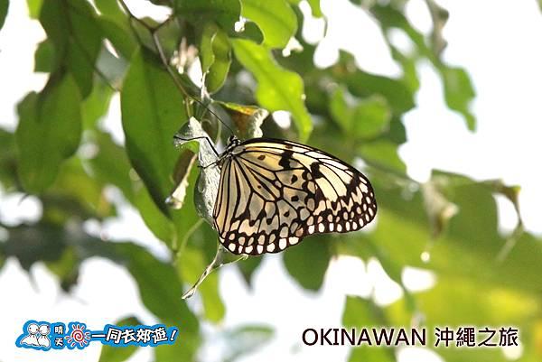 日本沖繩之旅-水果樂園